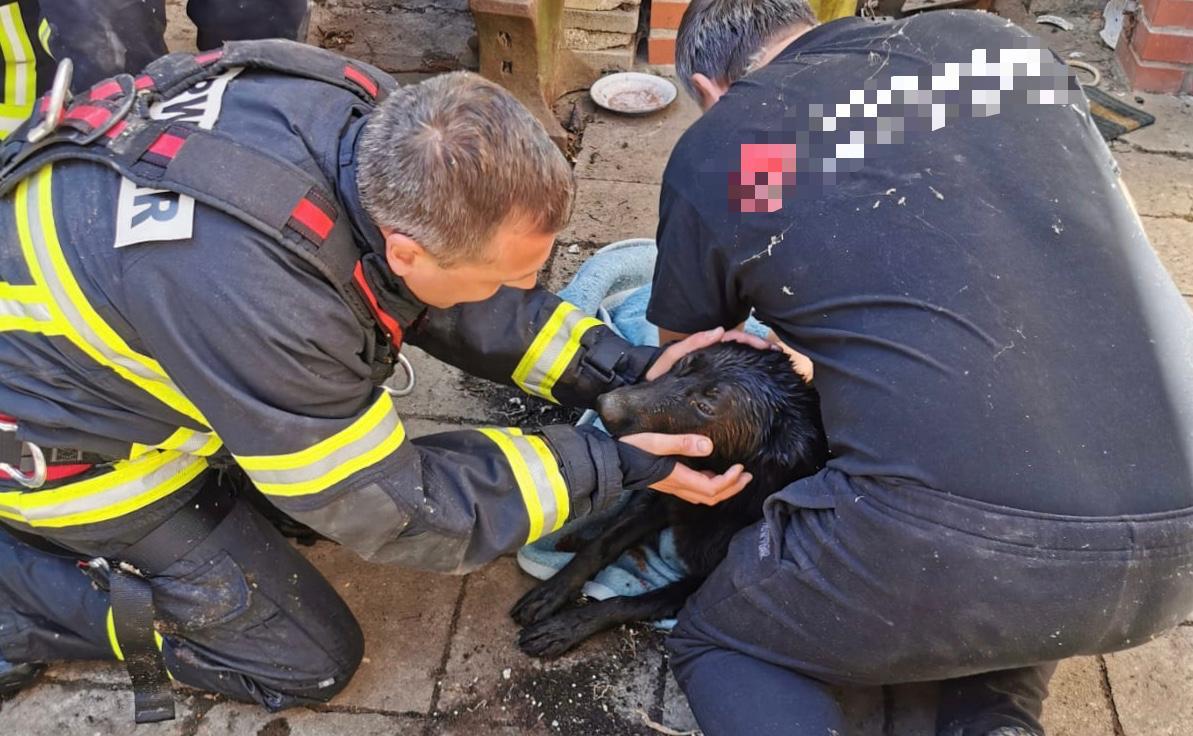 Hund aus Brunnenschacht gerettet